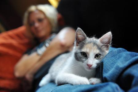Kutya, macska bélférgek: az emberre is veszélyes!