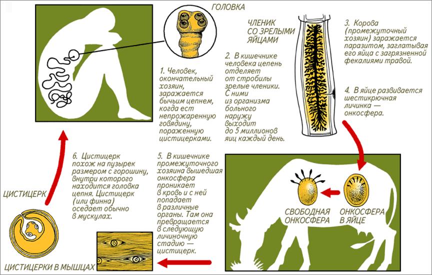paraziták vért fújnak a hpv megterheli a fej- és nyaki rákot