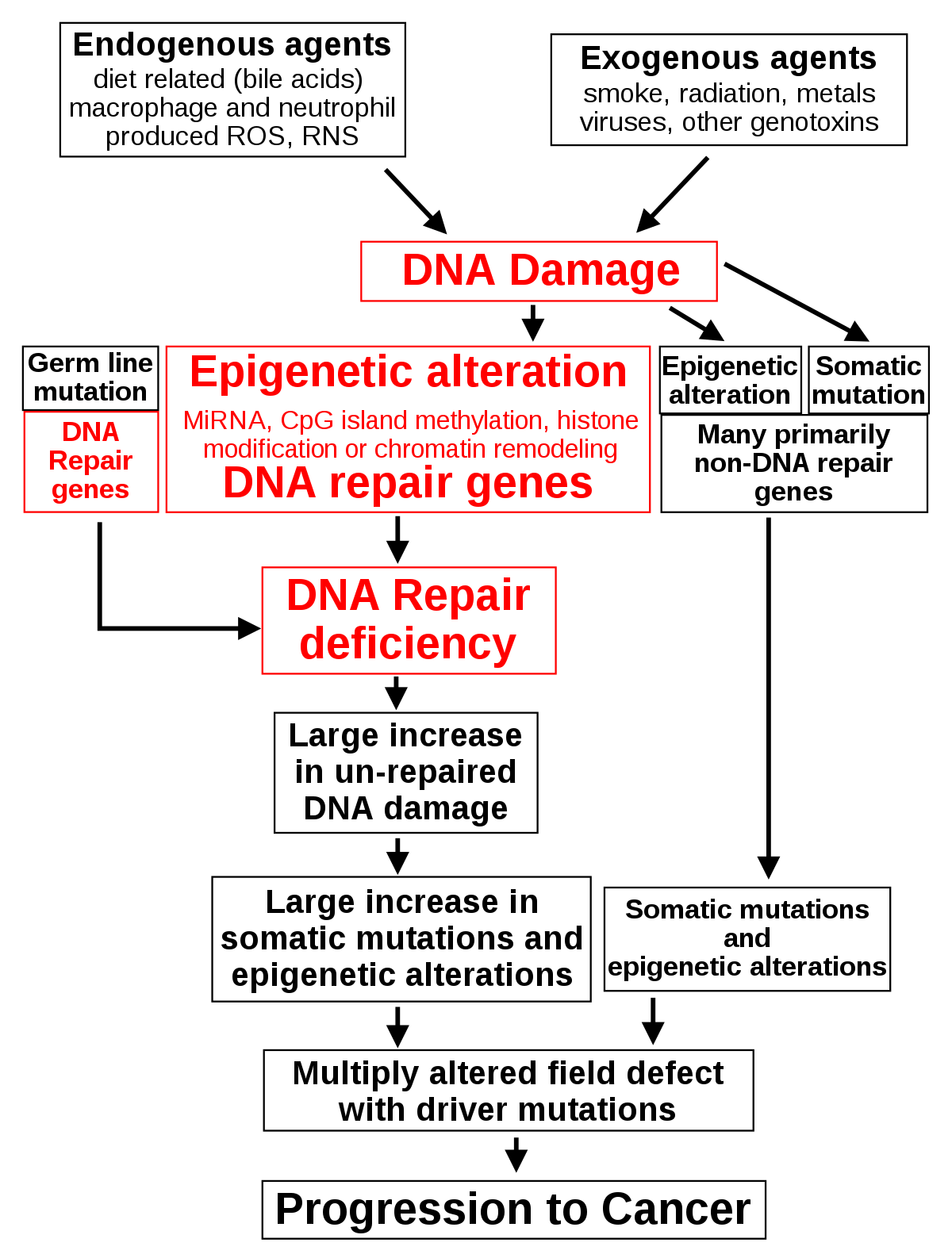 az emberi papilloma vírus kora hüvelyi condyloma az
