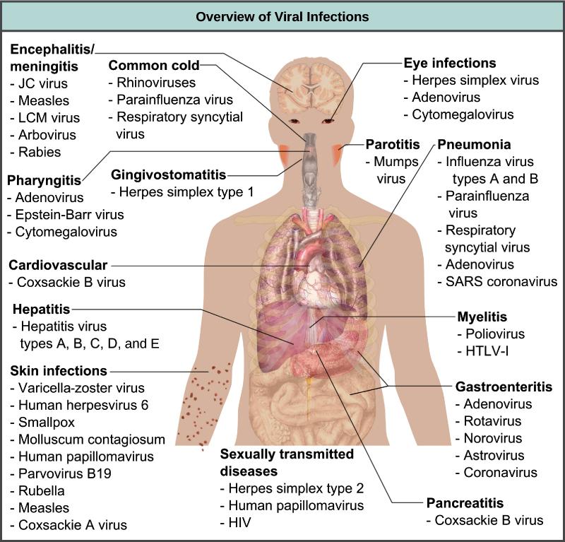 humán papillomavírus retrovírus endometrium rák stádium