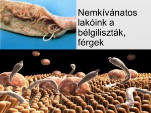 ___Kerteszeti_pakolunk.hu - Órokozók paraziták és azok gazdasejtjei