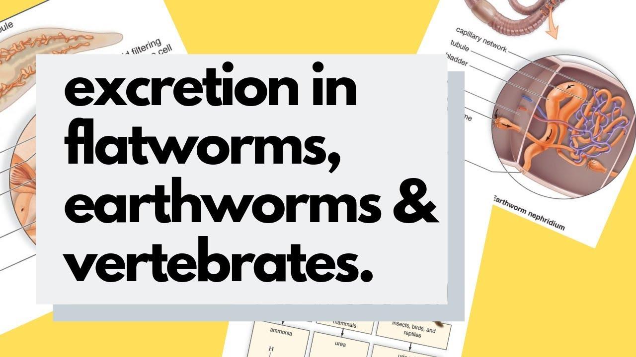 Schistosomiasis ozmózis - A belgyógyászat alapjai 1. | Digitális Tankönyvtár