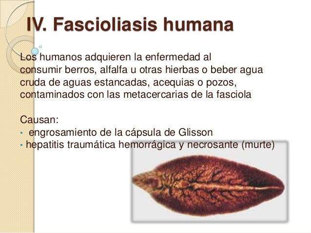 epizootológiai adatok a fascioliasisról